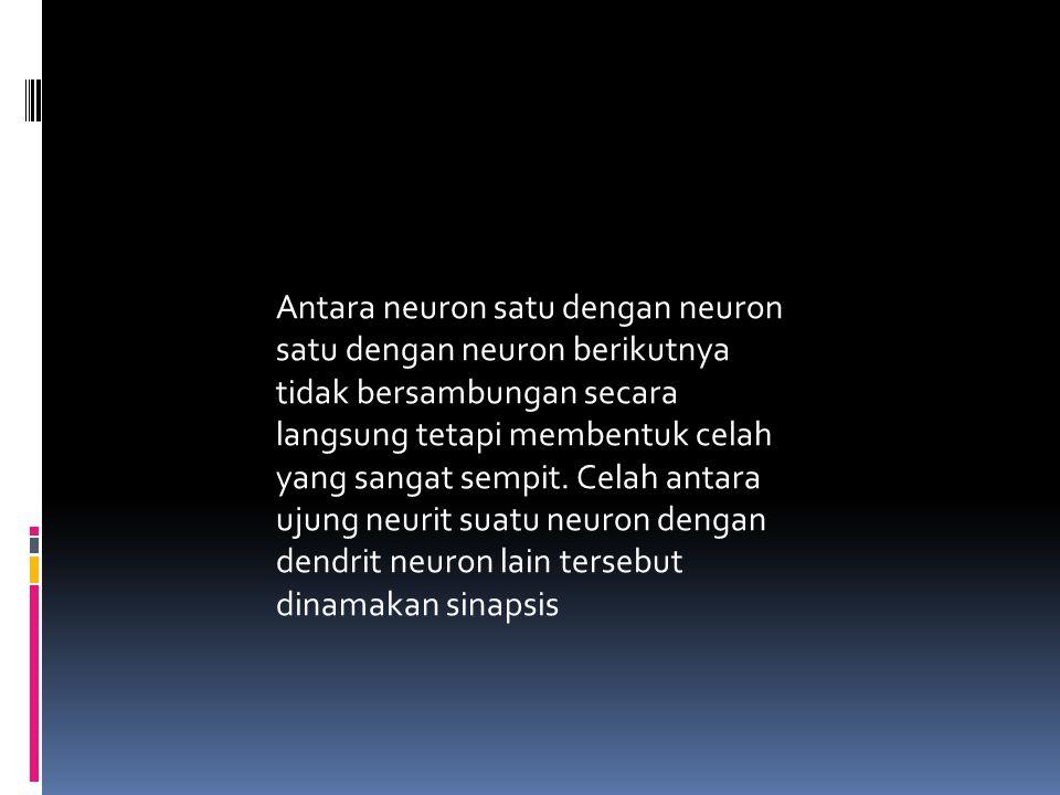 Antara neuron satu dengan neuron satu dengan neuron berikutnya tidak bersambungan secara langsung tetapi membentuk celah yang sangat sempit. Celah ant