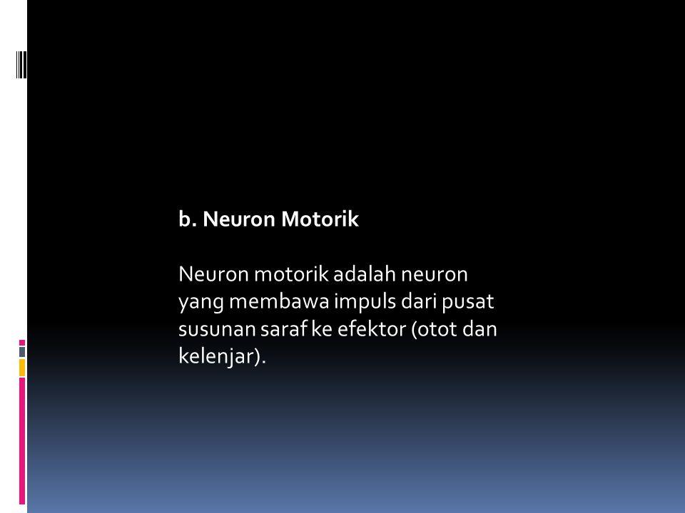 b. Neuron Motorik Neuron motorik adalah neuron yang membawa impuls dari pusat susunan saraf ke efektor (otot dan kelenjar).