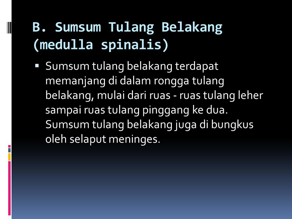 B. Sumsum Tulang Belakang (medulla spinalis)  Sumsum tulang belakang terdapat memanjang di dalam rongga tulang belakang, mulai dari ruas - ruas tulan