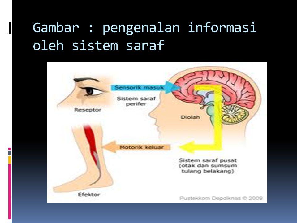Gambar : pengenalan informasi oleh sistem saraf