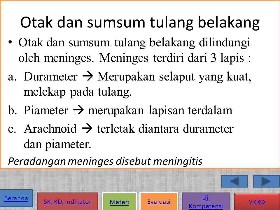 Beranda SK, KD, Indikator Materi Evaluasi Uji Kompetensi video SS sadar Ss Pusat Ss Tepi Sistem saraf Ss tak sadar Otak Sumsum Otak besar Otak kecil Otak tengah Sumsum Lanjutan Sumsum Tulang belakang 12 Pasang serabut saraf otak (cranial) 31 Pasang serabut sumsum tulang belakang (spinal) ss.