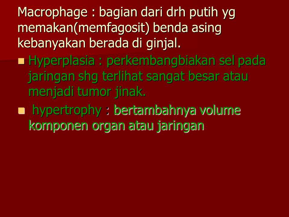 Macrophage : bagian dari drh putih yg memakan(memfagosit) benda asing kebanyakan berada di ginjal. Hyperplasia : perkembangbiakan sel pada jaringan sh