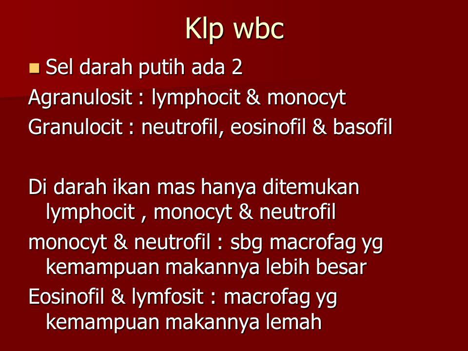 Klp wbc Sel darah putih ada 2 Sel darah putih ada 2 Agranulosit : lymphocit & monocyt Granulocit : neutrofil, eosinofil & basofil Di darah ikan mas ha