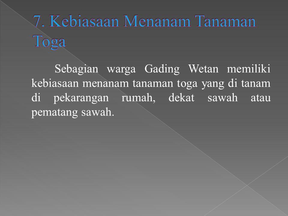 Sebagian warga Gading Wetan memiliki kebiasaan menanam tanaman toga yang di tanam di pekarangan rumah, dekat sawah atau pematang sawah.