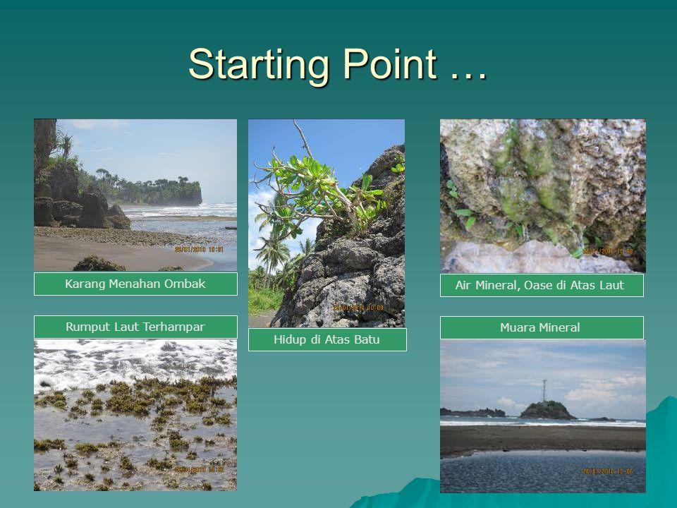 Starting Point … Karang Menahan Ombak Rumput Laut Terhampar Hidup di Atas Batu Air Mineral, Oase di Atas Laut Muara Mineral