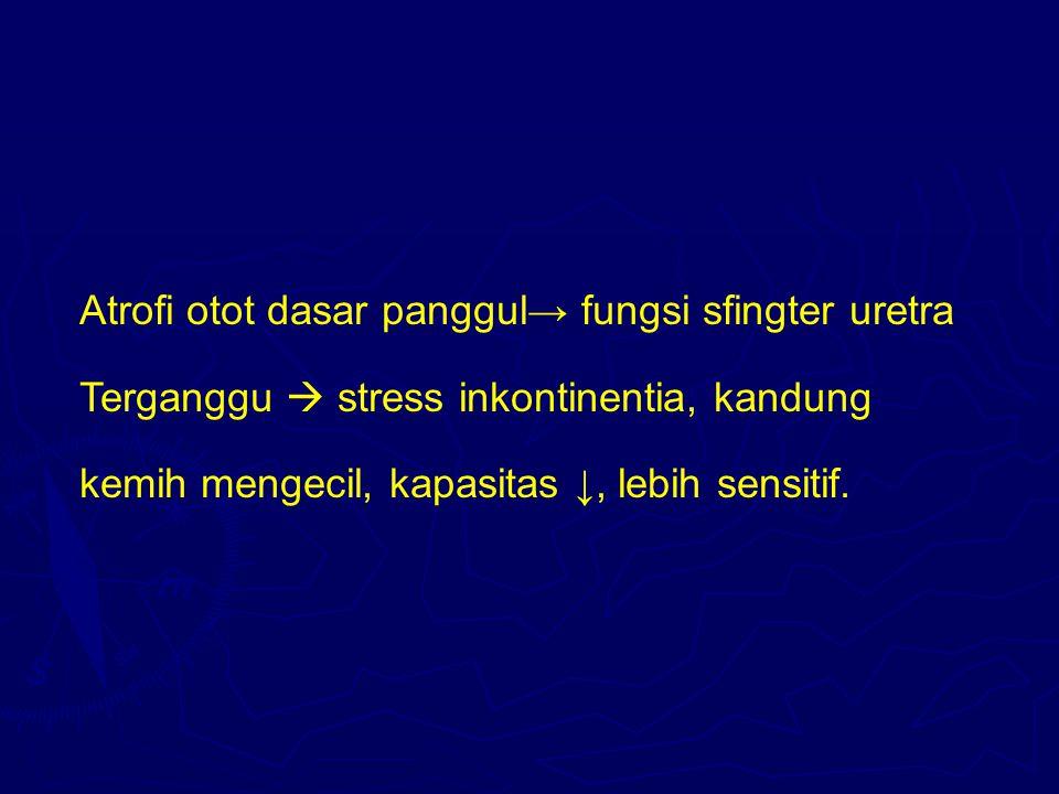 Atrofi otot dasar panggul→ fungsi sfingter uretra Terganggu  stress inkontinentia, kandung kemih mengecil, kapasitas ↓, lebih sensitif.