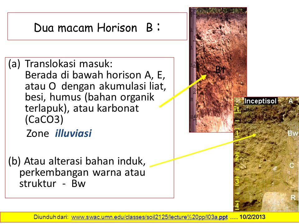 Dua macam Horison B : (a)Translokasi masuk: Berada di bawah horison A, E, atau O dengan akumulasi liat, besi, humus (bahan organik terlapuk), atau kar