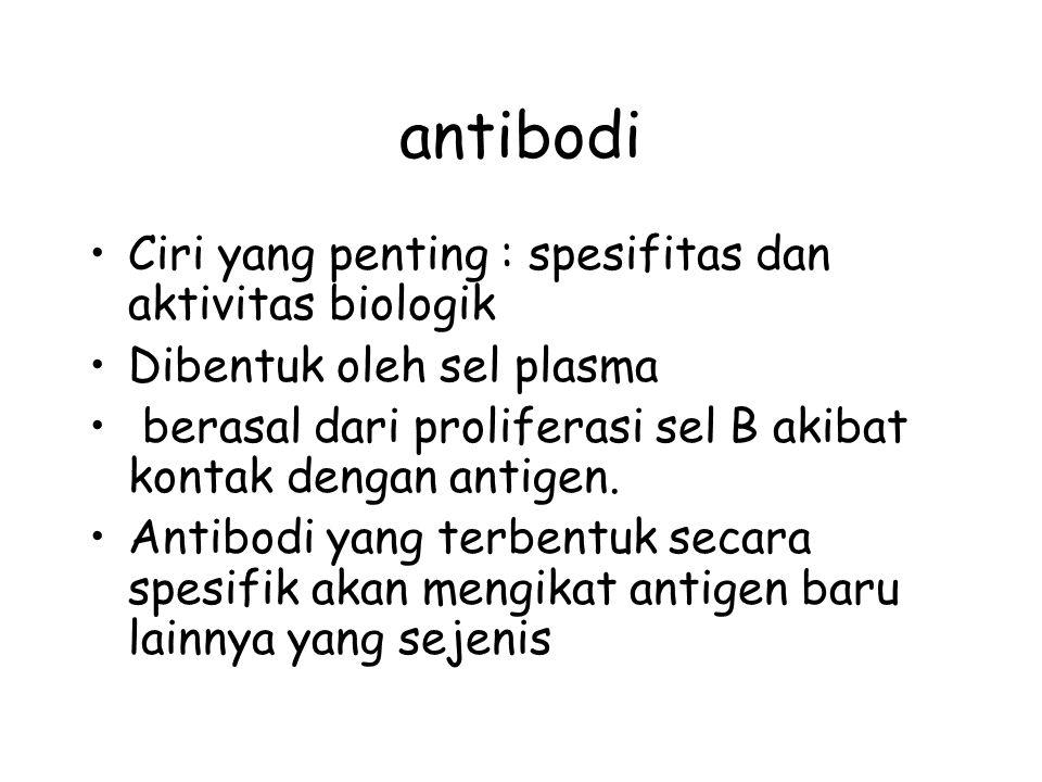 antibodi Ciri yang penting : spesifitas dan aktivitas biologik Dibentuk oleh sel plasma berasal dari proliferasi sel B akibat kontak dengan antigen.