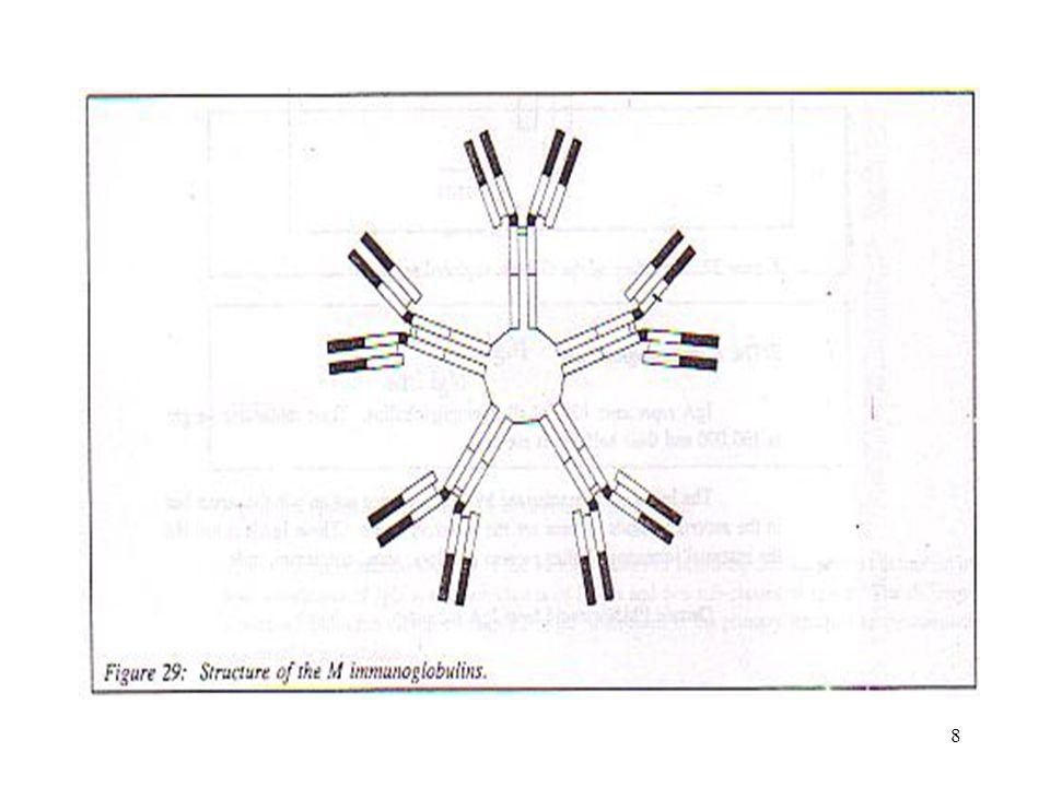 7 Ig M ( µ ) Pertama kali dibentuk ( jumlah dalam serum no 2 terbanyak ) Pada rangsangan ke 2 menurun Struktur – pentamer –Bm 900.000 dalton –10 antig