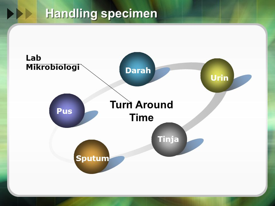 Handling specimen Pus Darah Urin Tinja Sputum Turn Around Time Lab Mikrobiologi