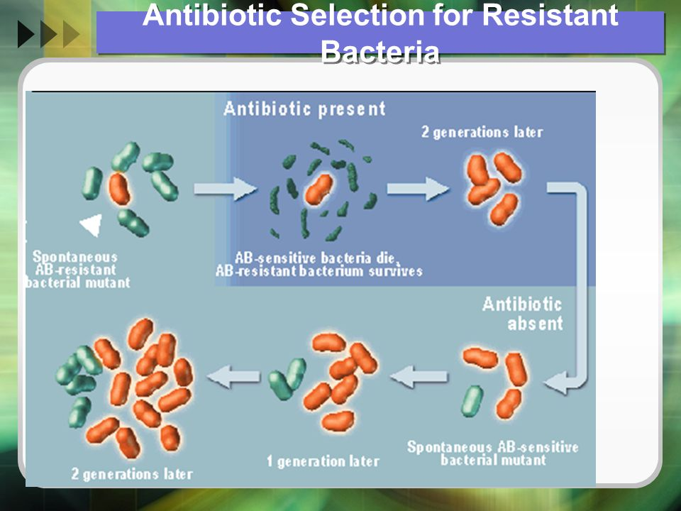Antibiotic Selection for Resistant Bacteria