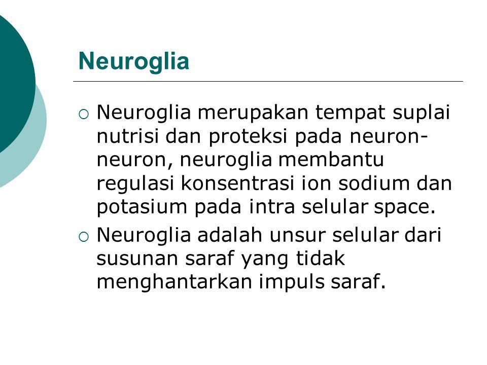 Neuroglia  Neuroglia merupakan tempat suplai nutrisi dan proteksi pada neuron- neuron, neuroglia membantu regulasi konsentrasi ion sodium dan potasiu
