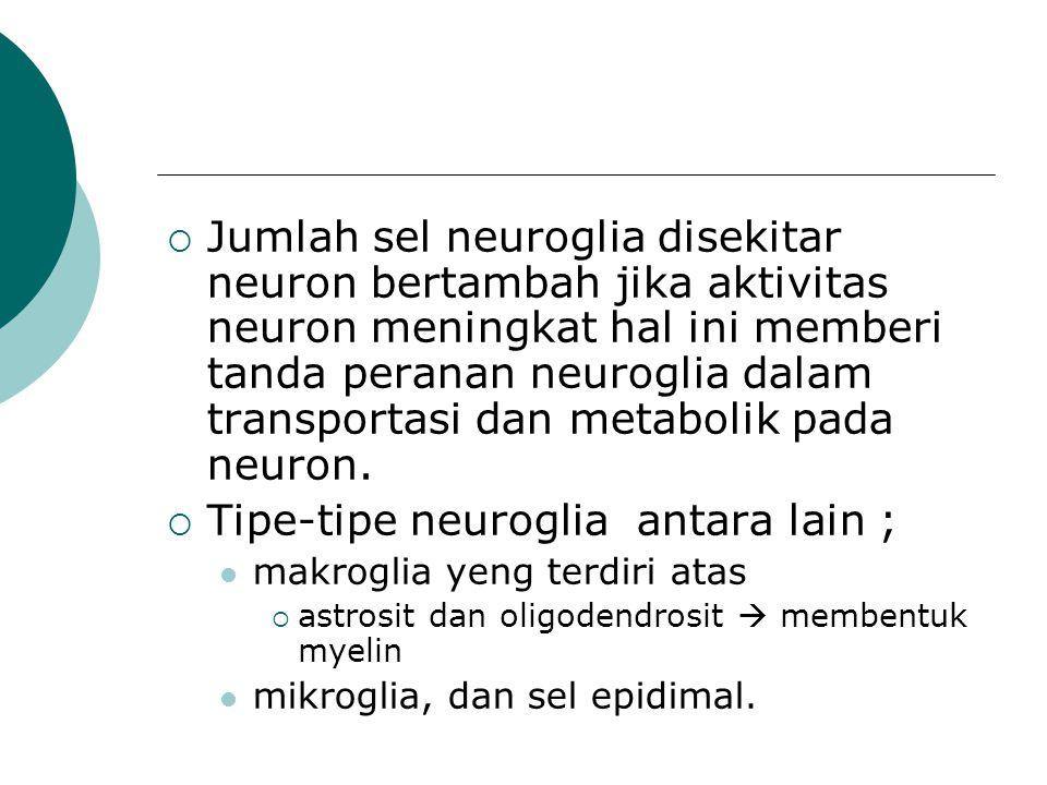  Jumlah sel neuroglia disekitar neuron bertambah jika aktivitas neuron meningkat hal ini memberi tanda peranan neuroglia dalam transportasi dan metab