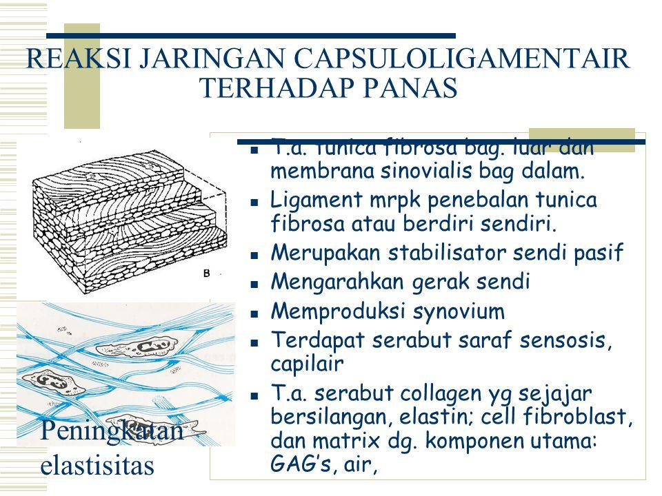 REAKSI JARINGAN CAPSULOLIGAMENTAIR TERHADAP PANAS T.a. tunica fibrosa bag. luar dan membrana sinovialis bag dalam. Ligament mrpk penebalan tunica fibr