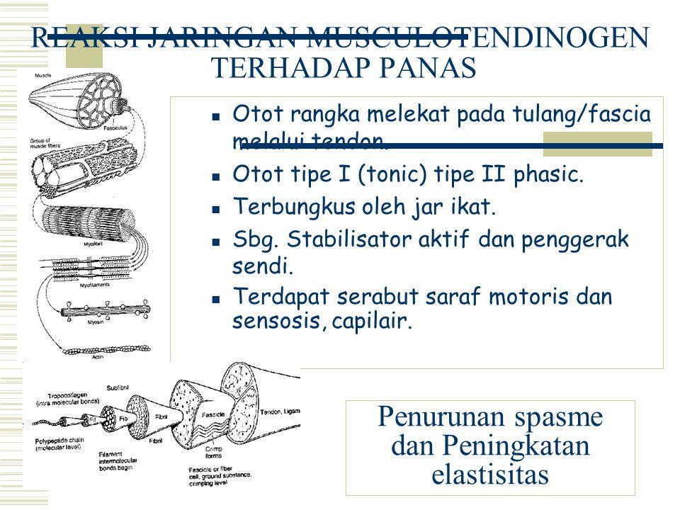 REAKSI JARINGAN MUSCULOTENDINOGEN TERHADAP PANAS Otot rangka melekat pada tulang/fascia melalui tendon. Otot tipe I (tonic) tipe II phasic. Terbungkus