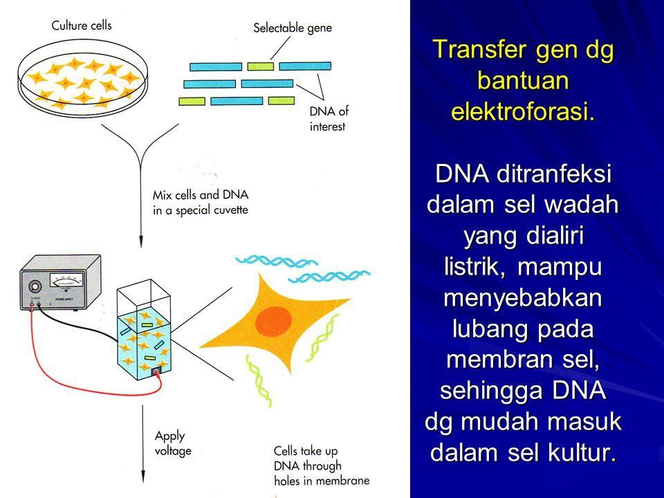 Transfer gen dg bantuan elektroforasi. DNA ditranfeksi dalam sel wadah yang dialiri listrik, mampu menyebabkan lubang pada membran sel, sehingga DNA d