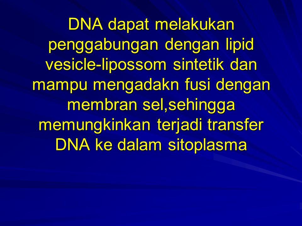 DNA dapat melakukan penggabungan dengan lipid vesicle-lipossom sintetik dan mampu mengadakn fusi dengan membran sel,sehingga memungkinkan terjadi tran