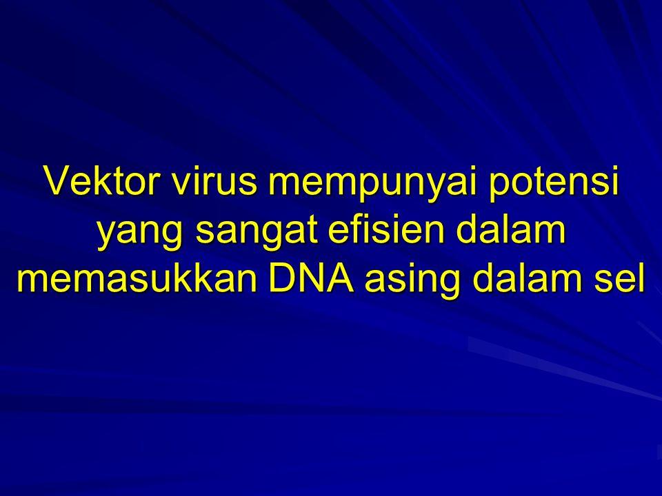 Vektor virus mempunyai potensi yang sangat efisien dalam memasukkan DNA asing dalam sel