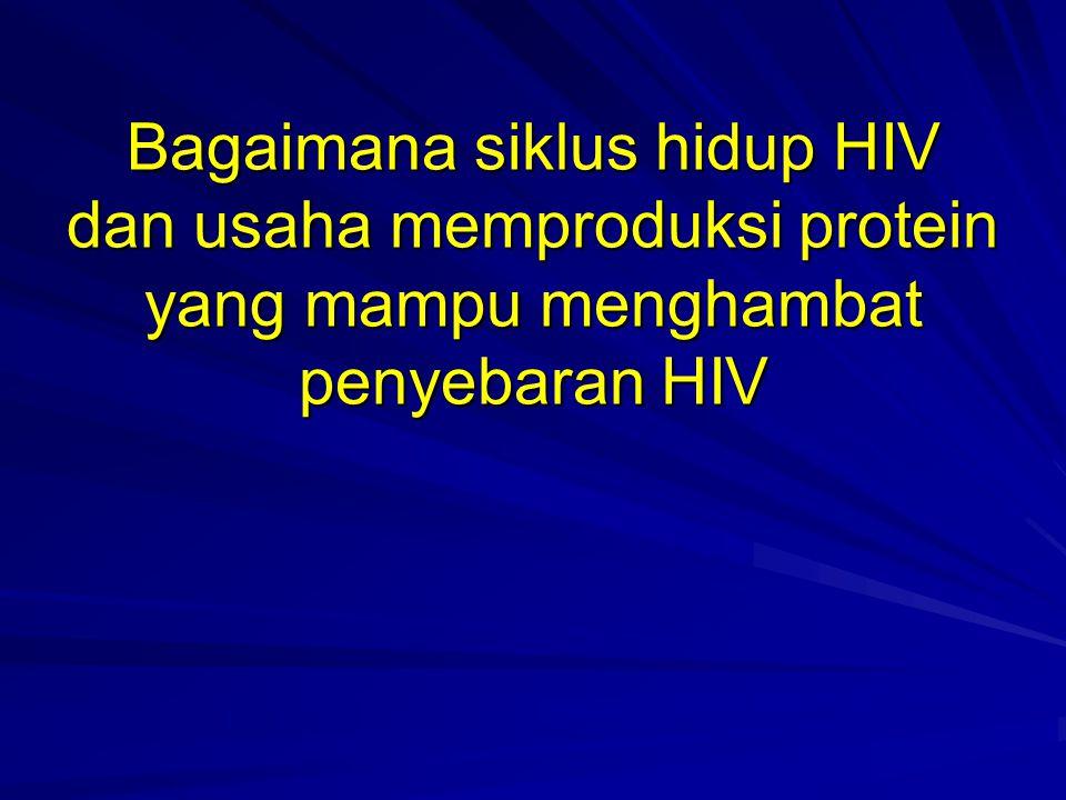Bagaimana siklus hidup HIV dan usaha memproduksi protein yang mampu menghambat penyebaran HIV