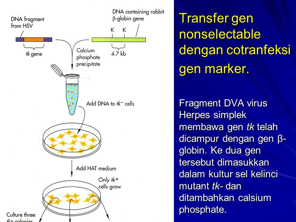 Transfer gen nonselectable dengan cotranfeksi gen marker. Fragment DVA virus Herpes simplek membawa gen tk telah dicampur dengan gen β- globin. Ke dua