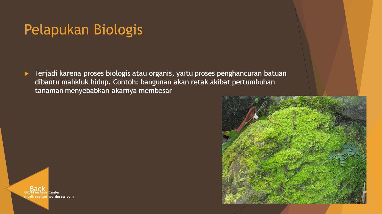 Pelapukan Biologis  Terjadi karena proses biologis atau organis, yaitu proses penghancuran batuan dibantu mahkluk hidup.