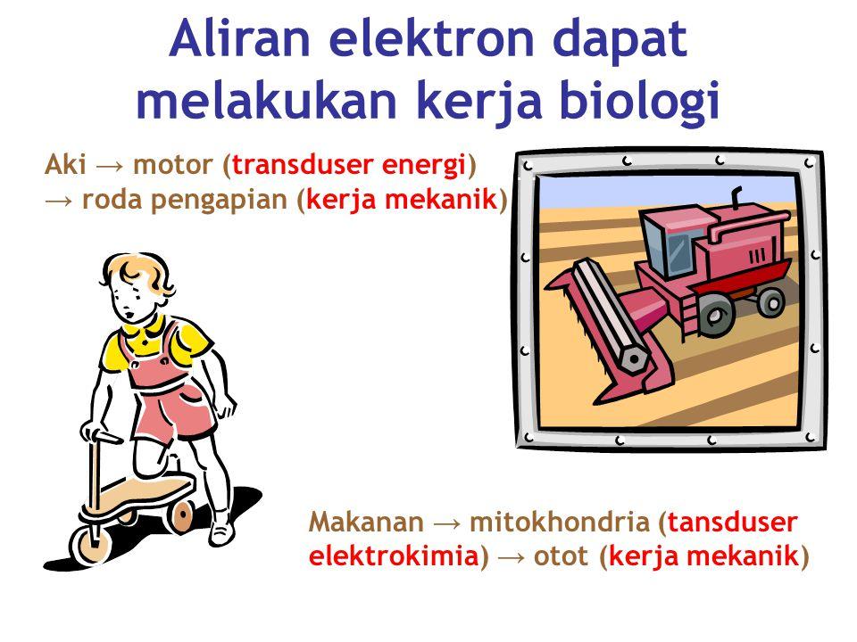 Aliran elektron dapat melakukan kerja biologi Aki → motor (transduser energi) → roda pengapian (kerja mekanik) Makanan → mitokhondria (tansduser elektrokimia) → otot (kerja mekanik)