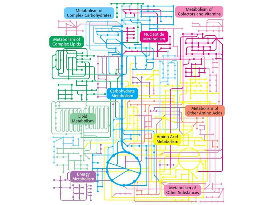 Kategori Metabolisme 1.Katabolisme (degradasi): penguraian molekul organik kompleks menjadi molekul anorganik sederhana (― energi) 2.Anabolisme (biosintesis): pembentukan molekul organik kompleks dari molekul anorganik sederhana (+ energi)