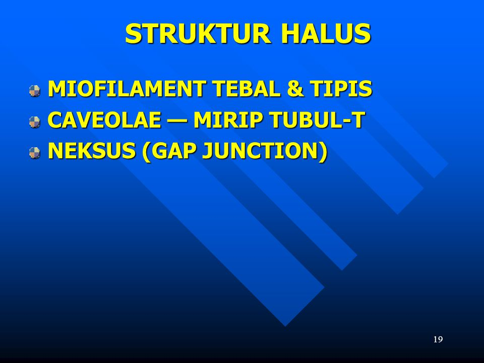 19 STRUKTUR HALUS MIOFILAMENT TEBAL & TIPIS CAVEOLAE — MIRIP TUBUL-T NEKSUS (GAP JUNCTION)