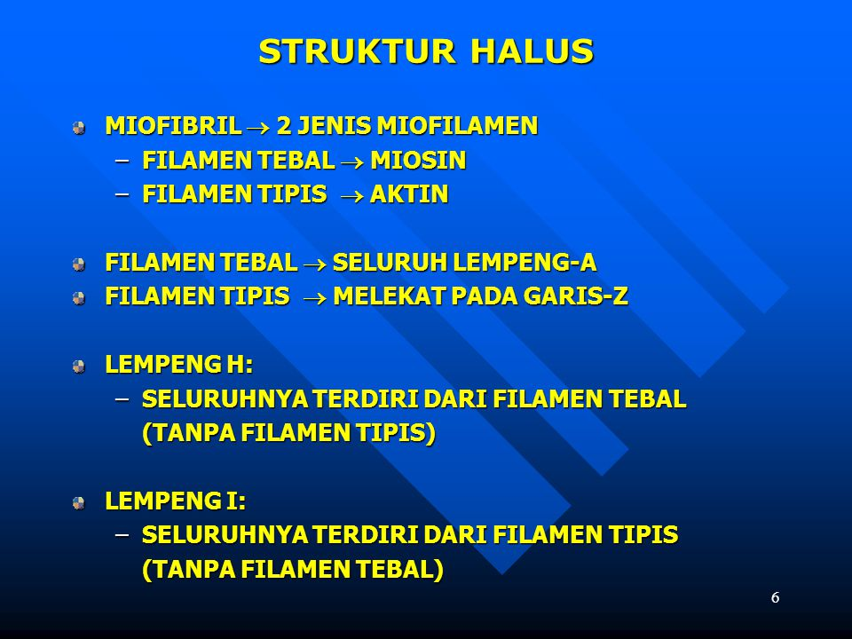6 STRUKTUR HALUS MIOFIBRIL  2 JENIS MIOFILAMEN –FILAMEN TEBAL  MIOSIN –FILAMEN TIPIS  AKTIN FILAMEN TEBAL  SELURUH LEMPENG-A FILAMEN TIPIS  MELEK
