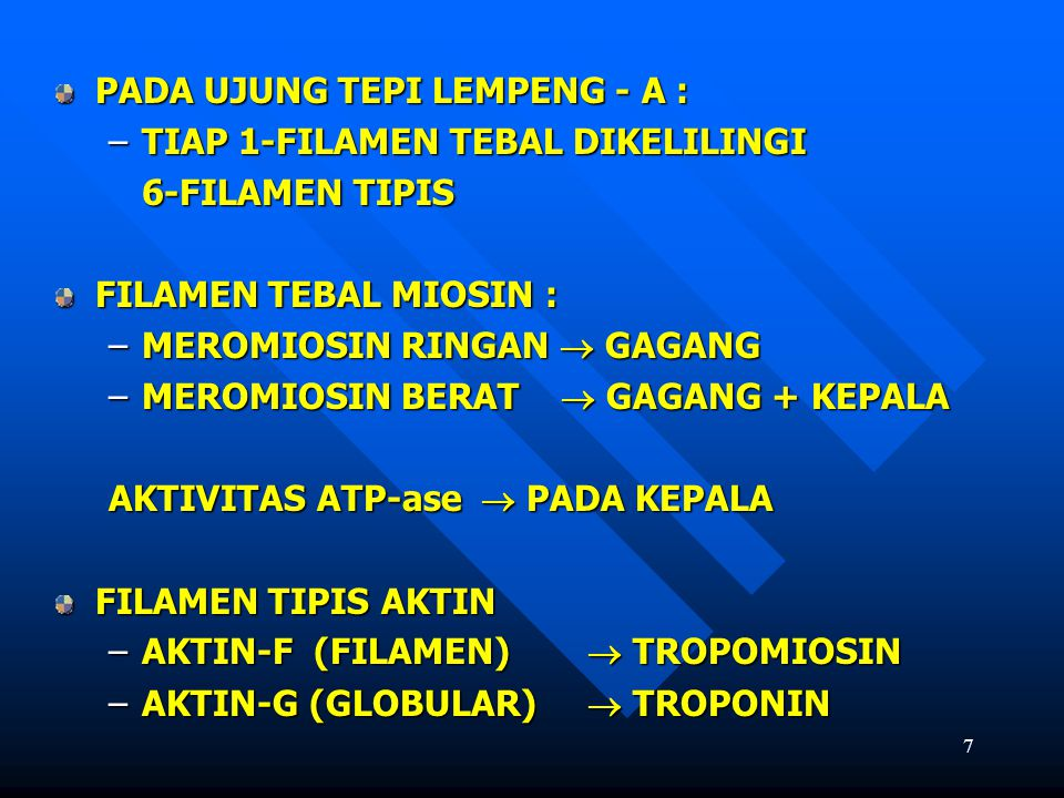 7 PADA UJUNG TEPI LEMPENG - A : –TIAP 1-FILAMEN TEBAL DIKELILINGI 6-FILAMEN TIPIS FILAMEN TEBAL MIOSIN : –MEROMIOSIN RINGAN  GAGANG –MEROMIOSIN BERAT