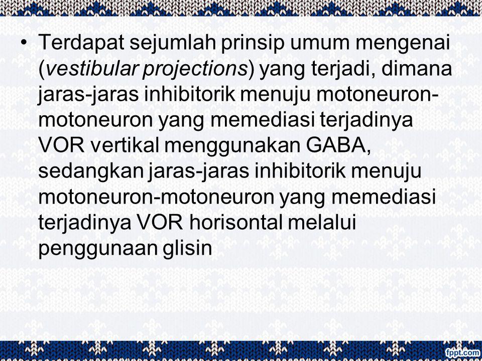Terdapat sejumlah prinsip umum mengenai (vestibular projections) yang terjadi, dimana jaras-jaras inhibitorik menuju motoneuron- motoneuron yang memed