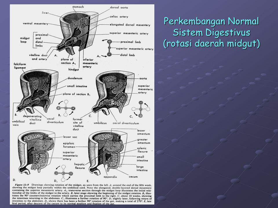 Perkembangan Normal Sistem Digestivus (rotasi daerah midgut)