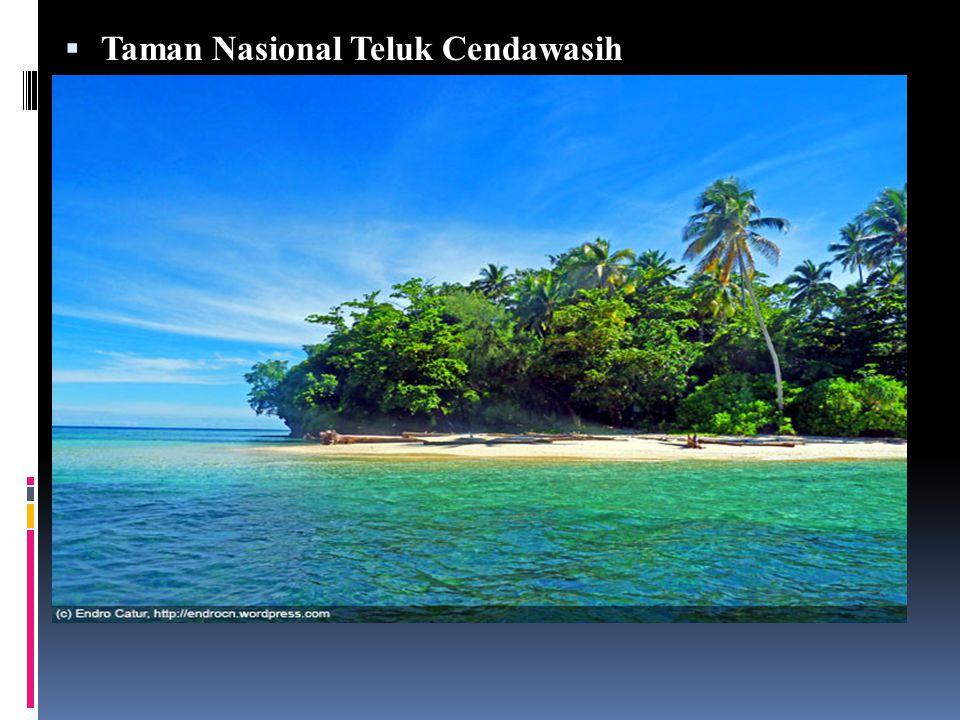  Taman Nasional Teluk Cendawasih Objek wisata alam yang tidak kalah terkenal yaitu Taman Nasional Teluk Cendrawasih yang terletak di Kabupaten Teluk Wondama.