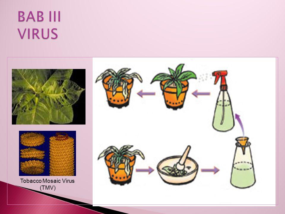 Virologi = cabang biologi yang mempelajari khusus tentang virus.