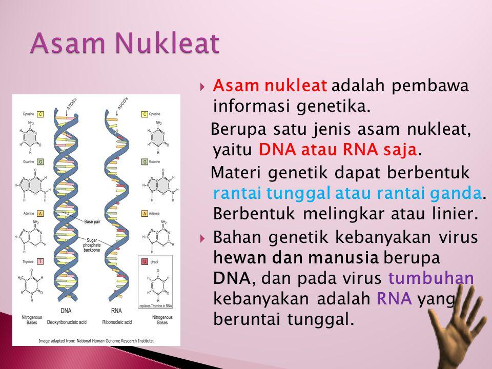  Asam nukleat adalah pembawa informasi genetika. Berupa satu jenis asam nukleat, yaitu DNA atau RNA saja. Materi genetik dapat berbentuk rantai tungg