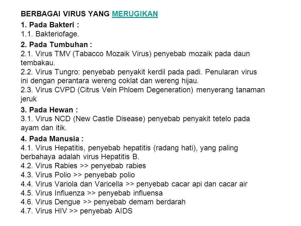 BERBAGAI VIRUS YANG MERUGIKANMERUGIKAN 1. Pada Bakteri : 1.1. Bakteriofage. 2. Pada Tumbuhan : 2.1. Virus TMV (Tabacco Mozaik Virus) penyebab mozaik p
