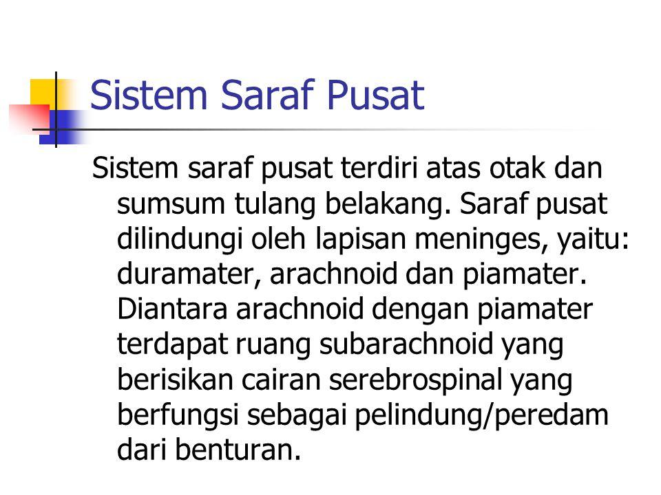 Sistem Saraf Pusat Sistem saraf pusat terdiri atas otak dan sumsum tulang belakang. Saraf pusat dilindungi oleh lapisan meninges, yaitu: duramater, ar
