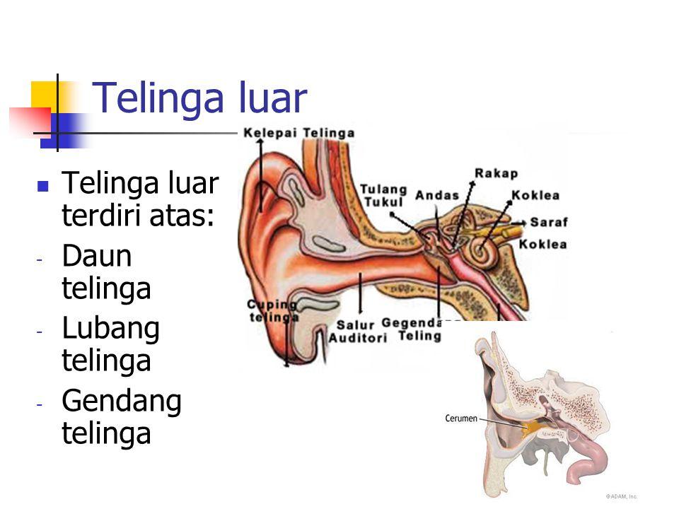 Telinga luar Telinga luar terdiri atas: - Daun telinga - Lubang telinga - Gendang telinga