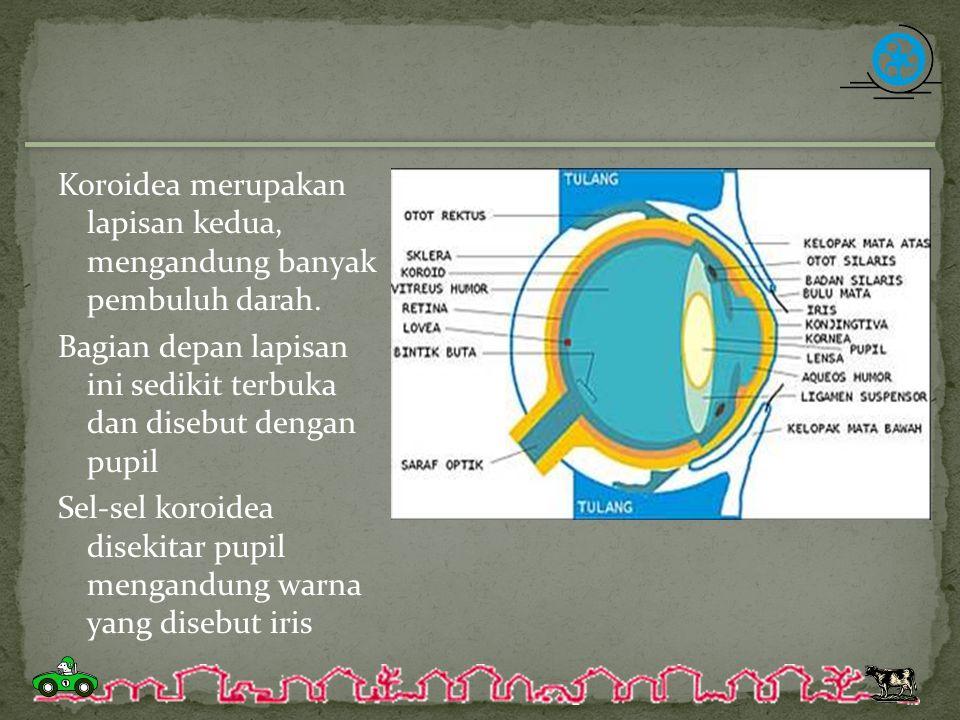 Koroidea merupakan lapisan kedua, mengandung banyak pembuluh darah. Bagian depan lapisan ini sedikit terbuka dan disebut dengan pupil Sel-sel koroidea