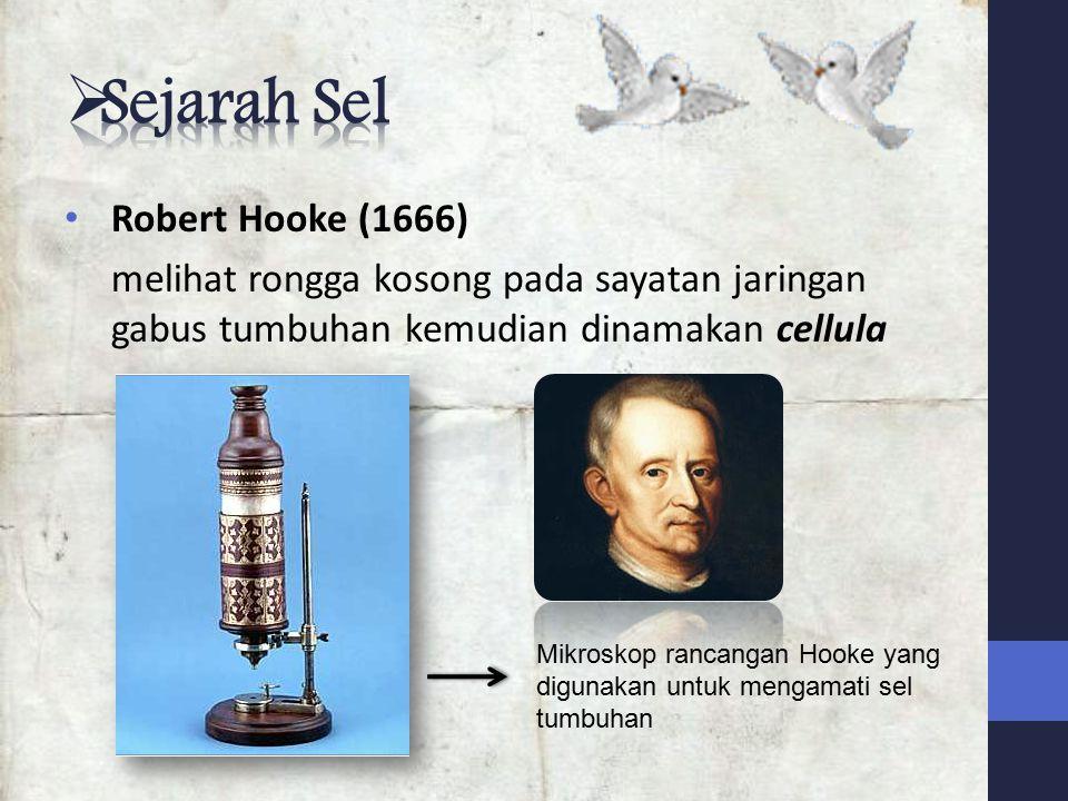 Robert Hooke (1666) melihat rongga kosong pada sayatan jaringan gabus tumbuhan kemudian dinamakan cellula Mikroskop rancangan Hooke yang digunakan untuk mengamati sel tumbuhan
