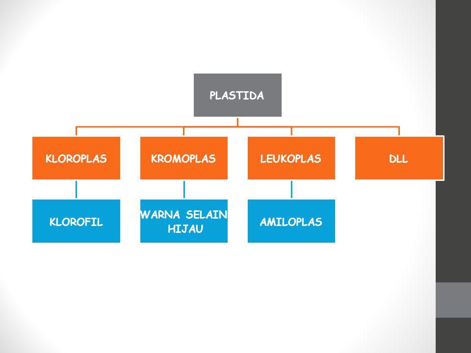 Kloroplas merupakan plastida yang mengandung klorofil BACK