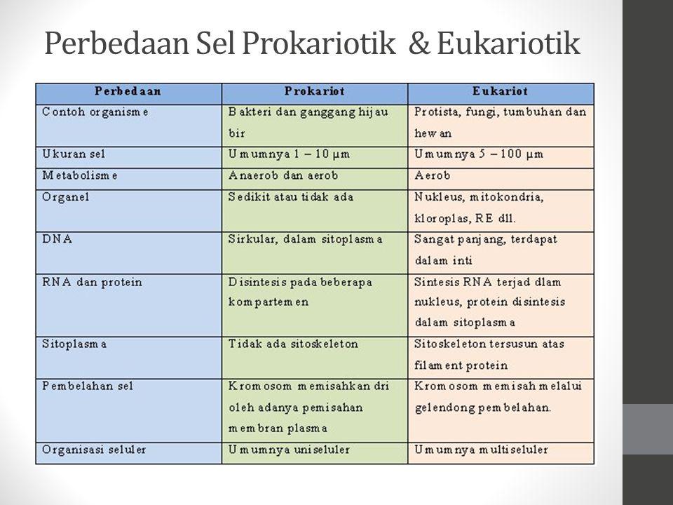 Perbedaan utama antara sel eukariotik dengan sel prokariotik, sel eukariotik memiliki nukleus sesungguhnya yang dibungkus oleh selubung nukleus. DNA p