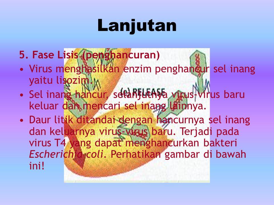 Lanjutan 5.Fase Lisis (penghancuran) Virus menghasilkan enzim penghancur sel inang yaitu lisozim.