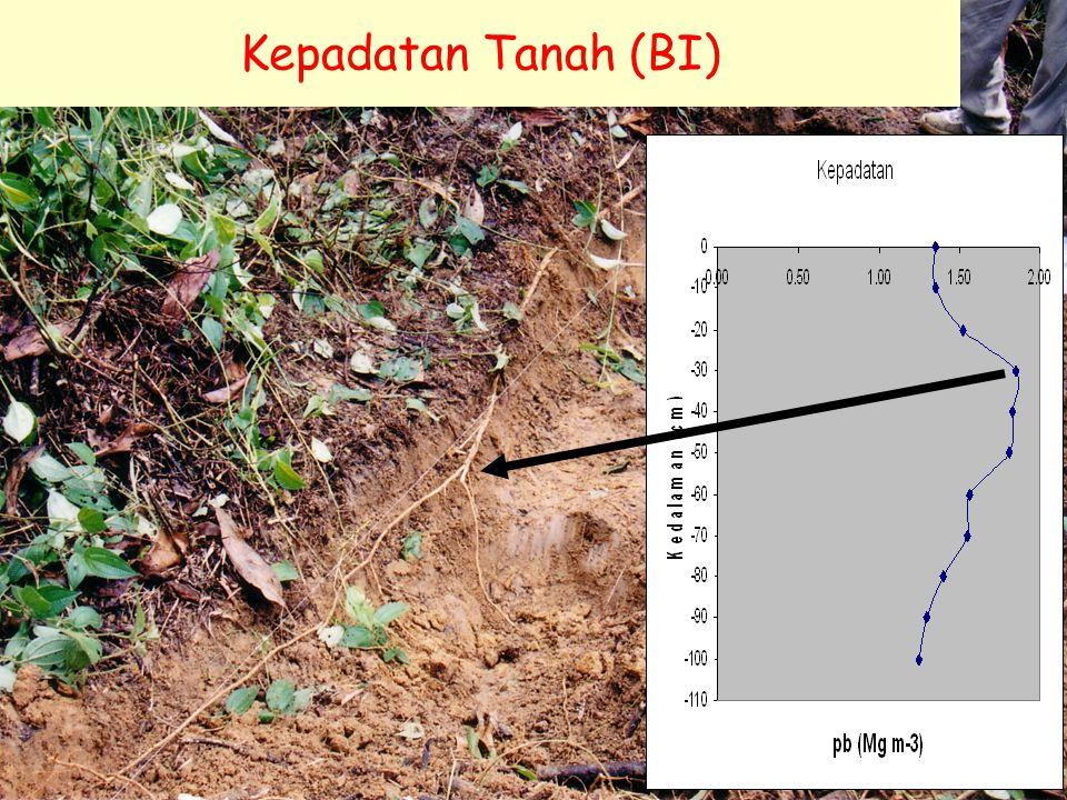 Kepadatan Tanah (BI)