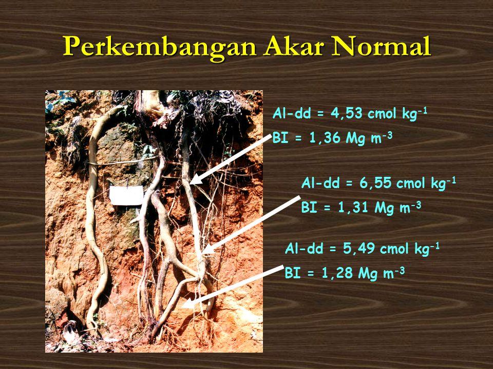 Perkembangan Akar Normal Al-dd = 6,55 cmol kg -1 BI = 1,31 Mg m -3 Al-dd = 4,53 cmol kg -1 BI = 1,36 Mg m -3 Al-dd = 5,49 cmol kg -1 BI = 1,28 Mg m -3