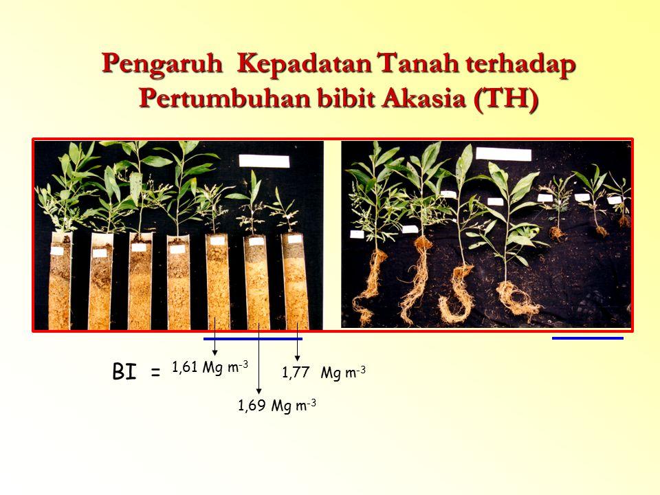 Pengaruh Kepadatan Tanah terhadap Pertumbuhan bibit Akasia (TH) 1,61 Mg m -3 1,69 Mg m -3 1,77 BI = Mg m -3
