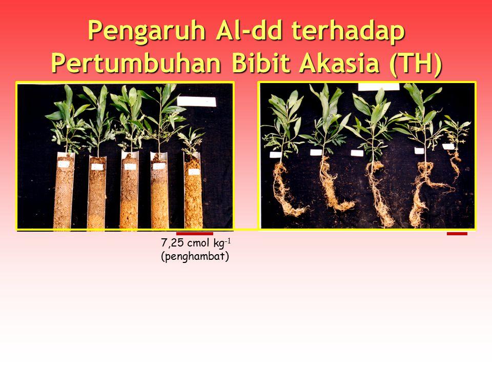 Pengaruh Al-dd terhadap Pertumbuhan Bibit Akasia (TH) 7,25 cmol kg -1 (penghambat)