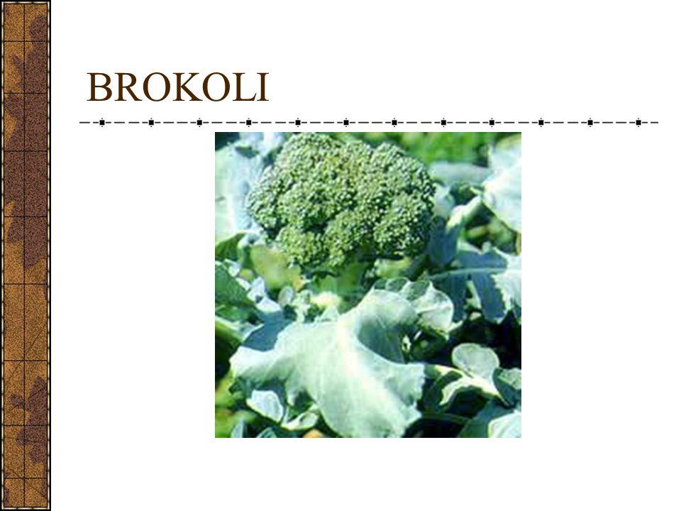 Nama latin Brassicaceae oleraceae italica Sumber antioksidan, diantaranya : Karotenoid Indole-3-carbinol Glukosinolat Dithione Klorofil Isothiocyanates Dapat menyebabkan penyakit goiter