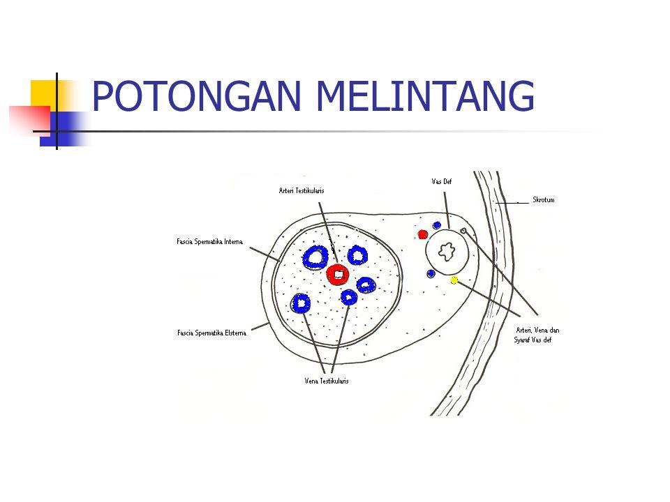 POTONGAN MELINTANG