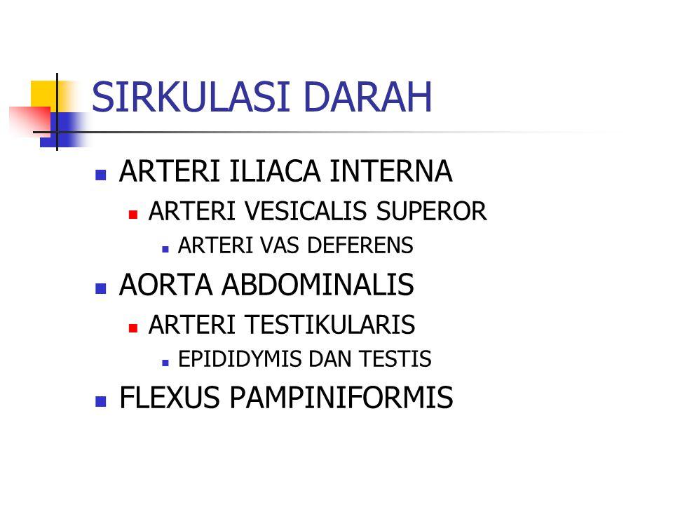 SIRKULASI DARAH ARTERI ILIACA INTERNA ARTERI VESICALIS SUPEROR ARTERI VAS DEFERENS AORTA ABDOMINALIS ARTERI TESTIKULARIS EPIDIDYMIS DAN TESTIS FLEXUS PAMPINIFORMIS